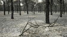 Instrucción a fuego lento: el juicio por el incendio de Doñana, no antes de un año