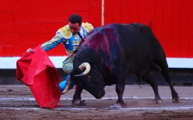 Enrique Ponce se dobla con el cuarto toro de Núñez del Cuvillo en el epílogo de su templada faena