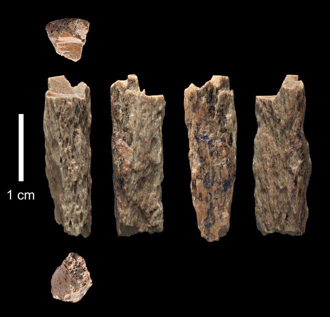 Hallan restos de la primera niña nacida de dos especies humanas distintas hace más de 50.000 años 15349583121724