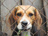 Woodford ha conseguido que los perros lleven mejor el estrés con sus...