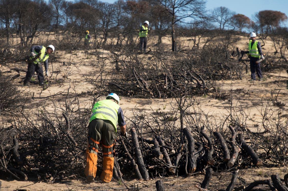 ESPAÑA: Doñana amenazada: La UE examina la salud del parque