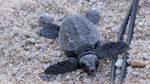 Atendida en Tenerife tras hallar una tortuga muerta en  su vagina