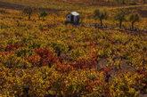 Vista de una finca de viñedos en otoño en El Bierzo (León)