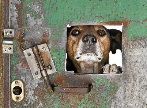 Un perro se asoma por una de las puertas de la protectora Defensa...