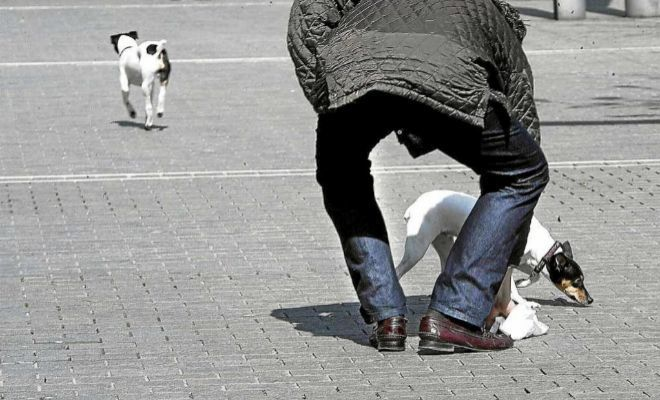Un señor pasea a sus perros en una plaza.