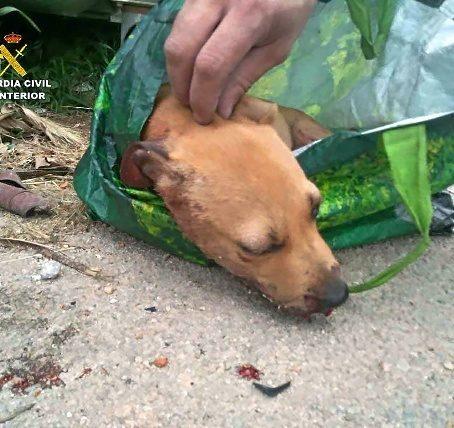 Detenido por dar una paliza a un cachorro y tirarlo a un contenedor