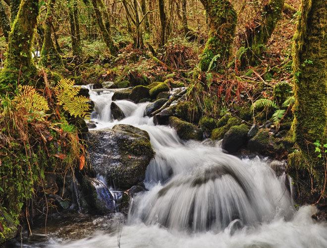 Los Bosques Sagrados De Galicia Que Tienes Que Conocer España