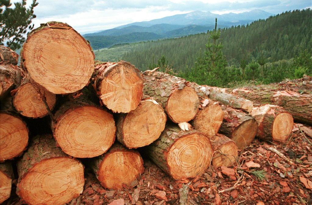 Explotación de pinos en Álava.