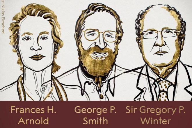 Premio Nobel de Química para los científicos que copiaron la evolución para curar enfermedades