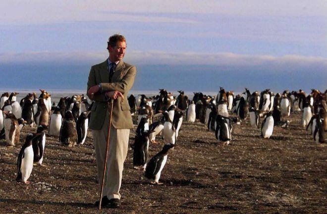 Los pingüinos de las Malvinas