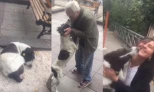 El perrito Jorge reconoció nada más verlo a su dueño Giorgi y se lo...