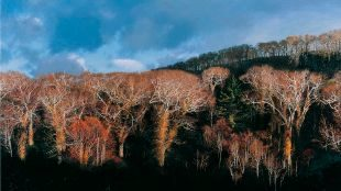 'Paso de Orofure' (2010) de Hiroshi Noda.