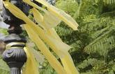 Lazos amarillos en una de las farolas de Barcelona, el pasado 1 de...