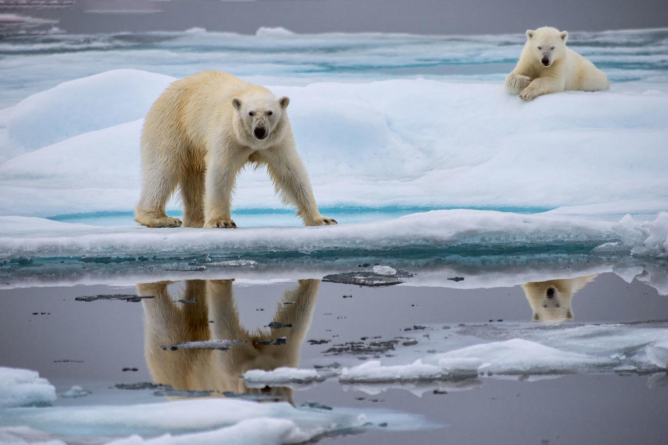 A medio camino entre Noruega y el Polo Norte se encuentran las...