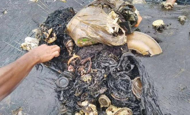 Objetos de plástico que se encontraban en el estómago del cachalote