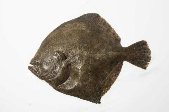 tipos de pescado blanco y azul