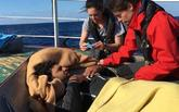 Miembros de Open Arms socorren a un migrante del pesquero alicantino...