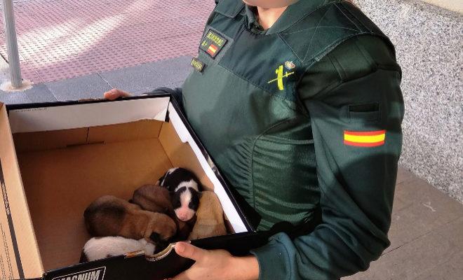 Los cachorros, tras ser rescatados.