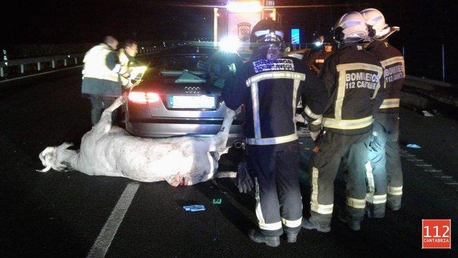 Bomberos y guardias civiles junto al coche que ha colisionado con la vaca en Quijas (Cantabria).
