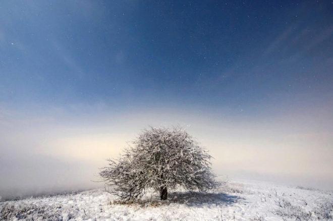 Imagen de un árbol cubierto de nieve en el invierno húngaro