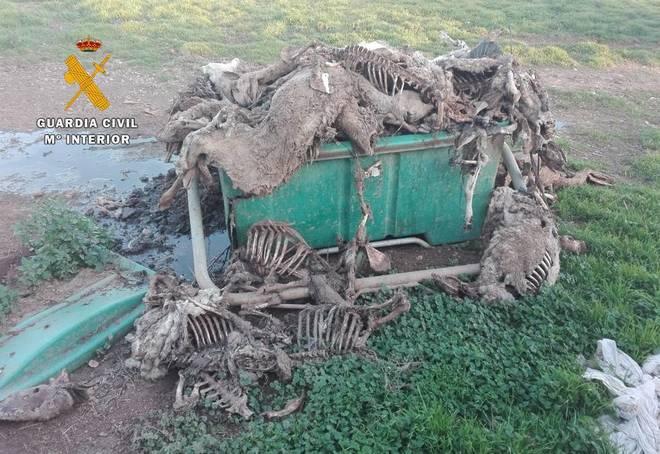 Contenedor donde se aplilaban cadáveres de ovejas y corderos.