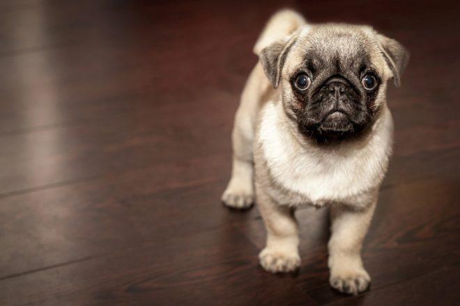 No se podrán vender cachorros en las tiendas en Reino Unido.