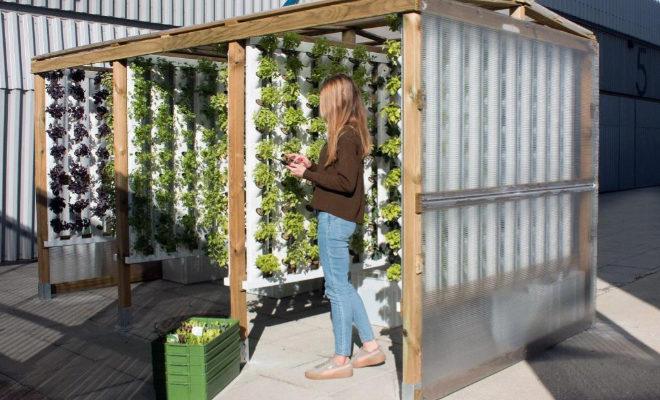 Cultivo vertical que impulsa Optimus Garden, empresa que disponer de verduras frescas y limpias con un bajo impacto ambiental y en un contexto urbano.