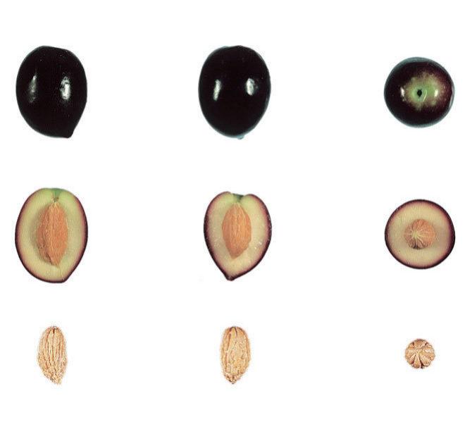 8efaa1d16c7 Qué diferencia al aceite de oliva virgen del virgen extra