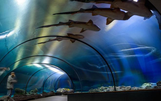 Pasar la noche con los tiburones es la propuesta de varios acuarios en España.