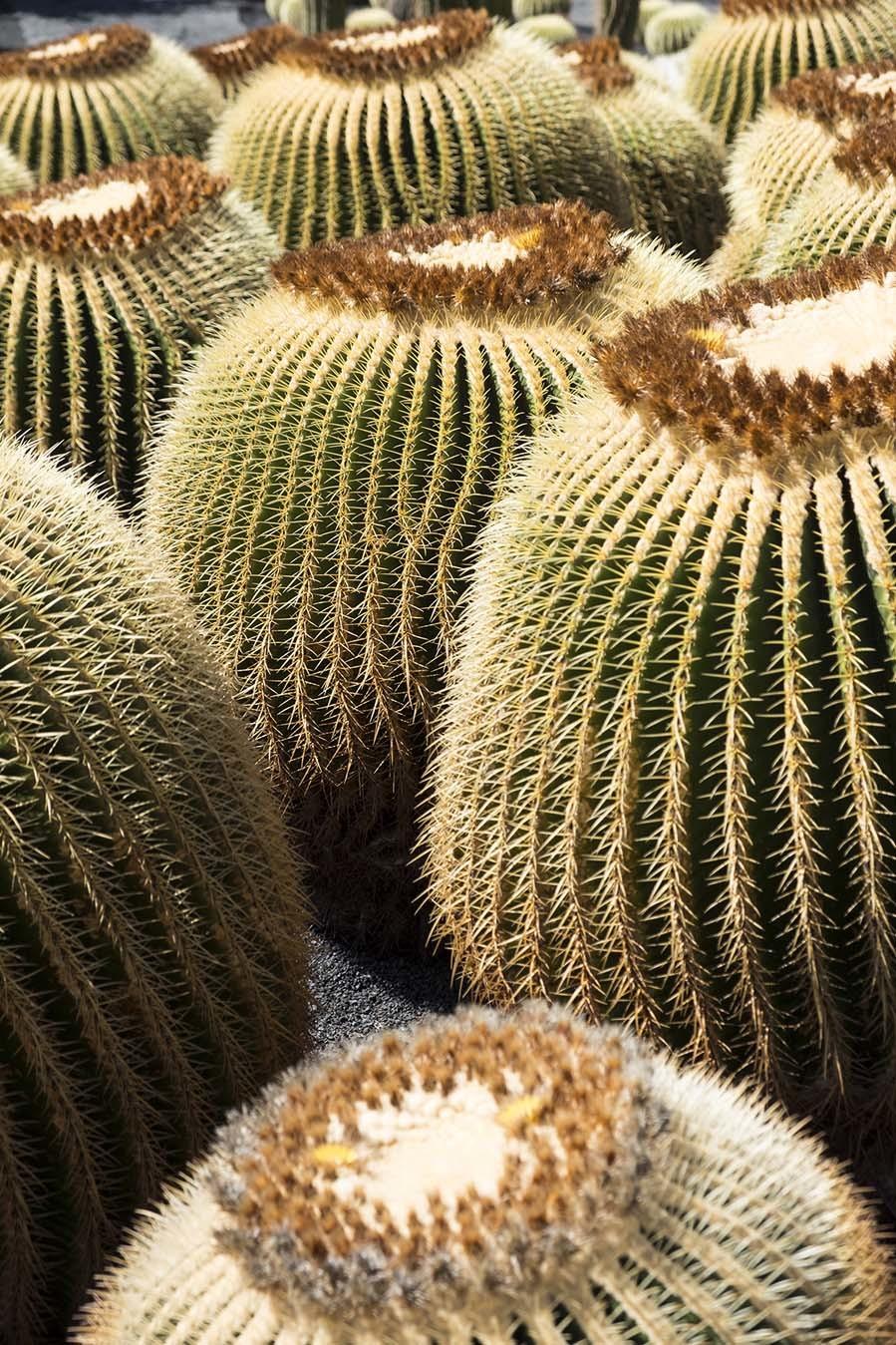 El Jardín de Cactus de Lanzarote alberga más de <strong>450 especies</strong> diferentes de estas plantas.