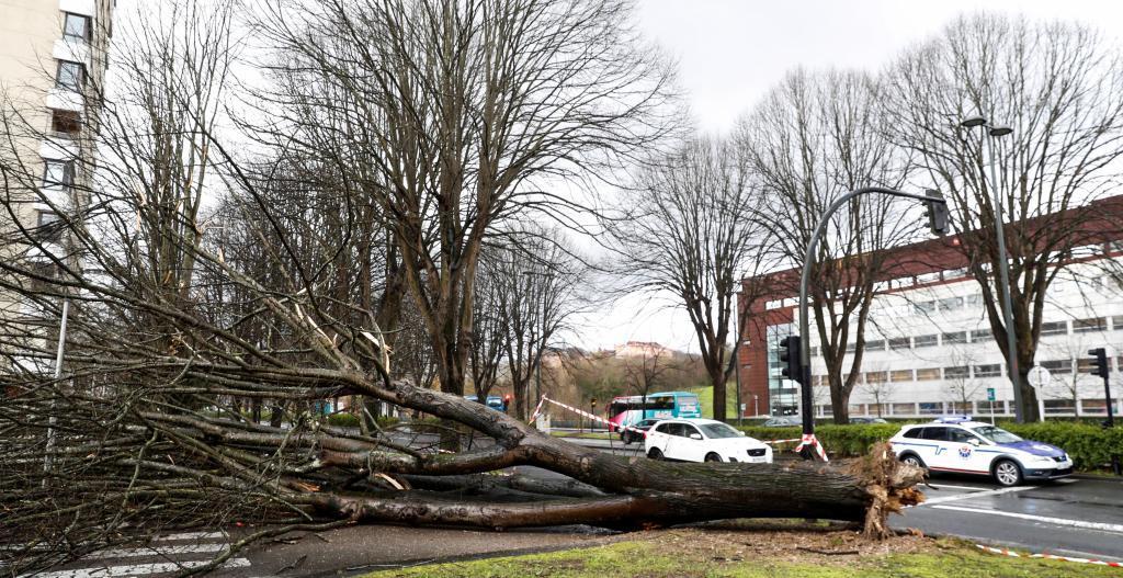 Árbol derribado por el viento en el barrio Lorea de San Sebastián.