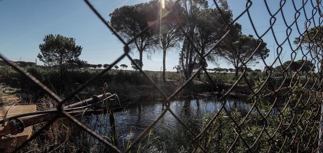 Balsa de riego ilegal construida cerca de alguno de los 77 pozos de agua ilegales que la Confederación Hidrográfica del Guadalquivir (CHG) quiere cerrar.