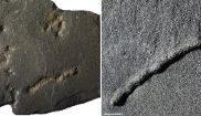 Detalle de los fósiles analizados