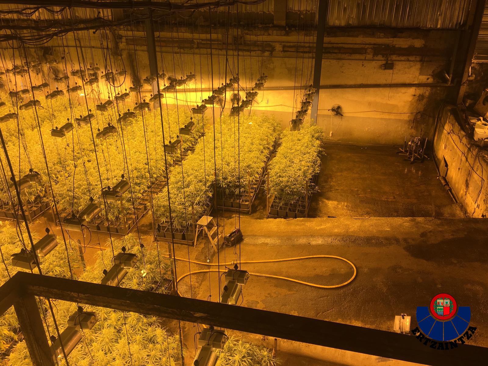 Parte del pabellón de Zumaia con las plantas de marihuana.