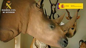 Taxideralia: cae una de las mayores redes de tráfico ilegal de animales