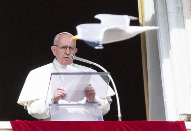 Un pájaro pasa volando frente al Papa mientras la reza la Oración del Ángelus.