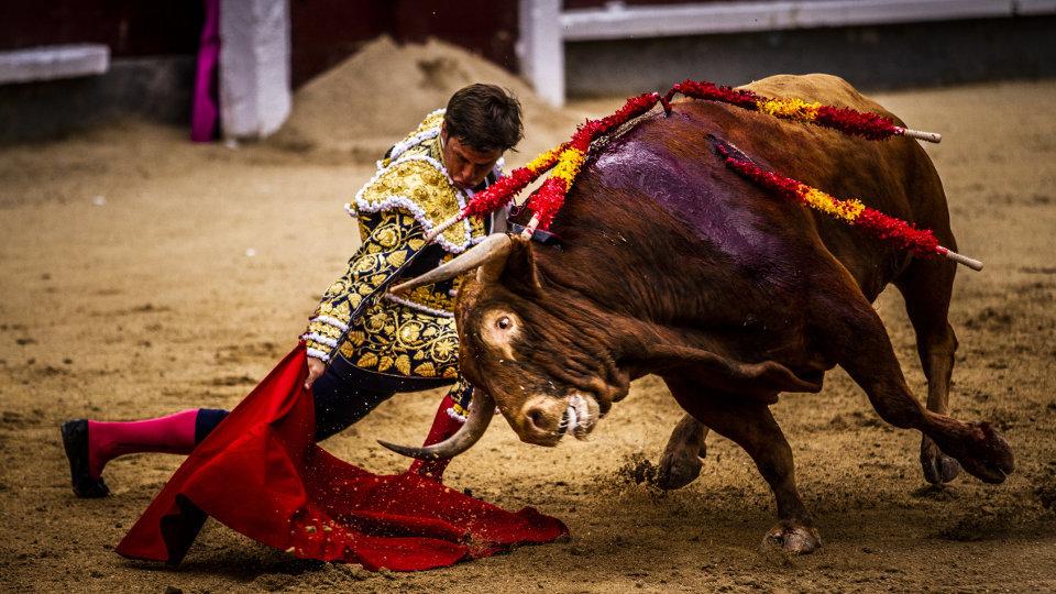 """El Juli durante la faena a """"Licenciado"""" el pasado San Isidro"""