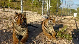 El último hogar de los animales de circo jubilados