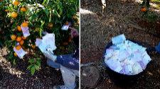 El clan estafador  que 'recolectaba' billetes de 500 ¤ de los naranjos
