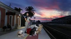 Los perros también quieren viajar en tren