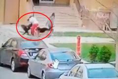 Utiliza su cuerpo para proteger a un niño del ataque de dos perros