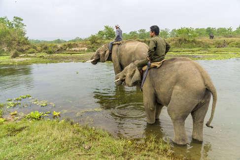 Elefantes en el Parque Nacional Chitwan (Nepal).