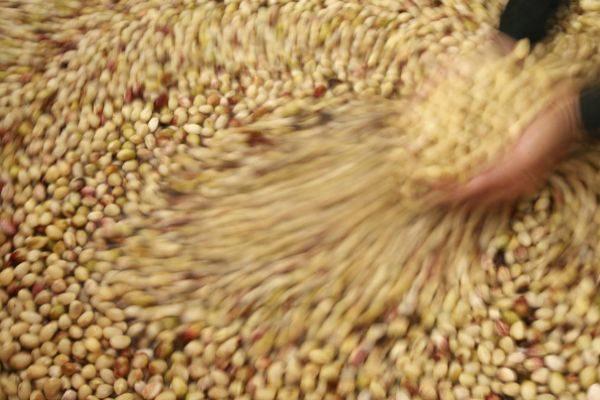 Una mujer coge un puñado de pistachos.