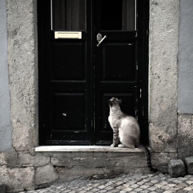 Llegó la cuaresma para las ratas de Lisboa: el Ayuntamiento da luz verde a la creación de la 'Patrulla Gatuna'