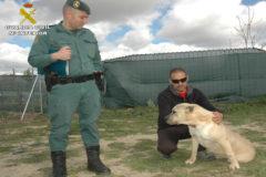 Un agente del Seprona con un perro de raza peligrosa.
