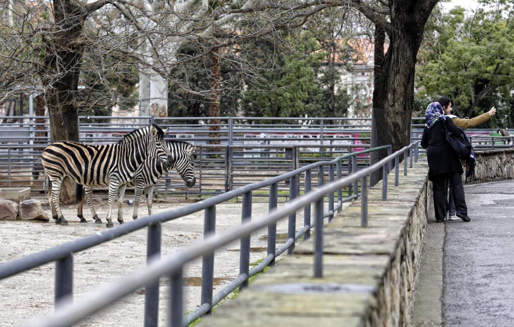 Cebras en el zoológico