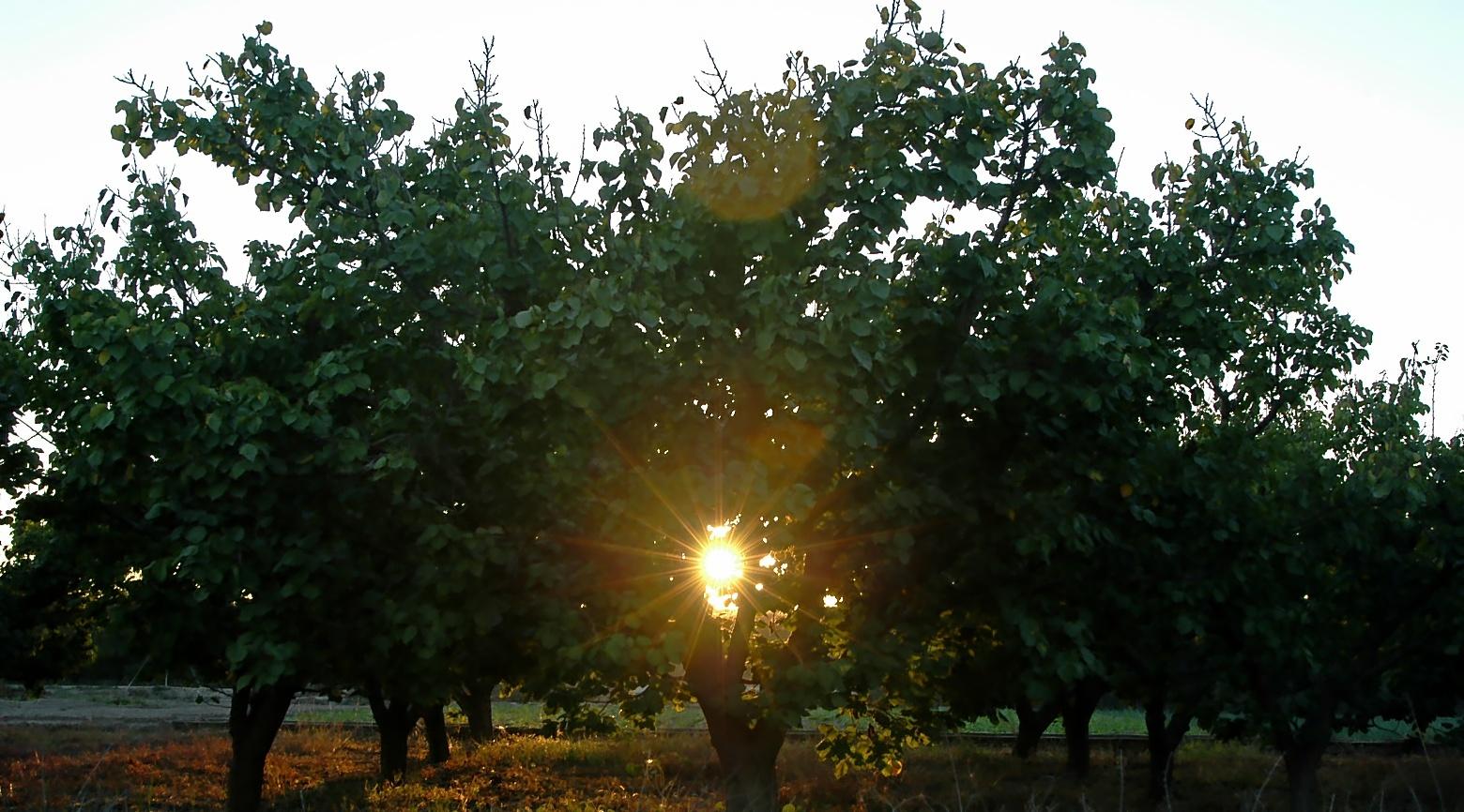 Imagen de varios naranjos en una explotación agrícola.