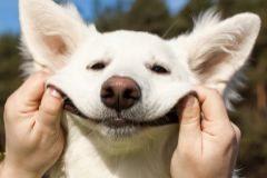 Neurotoxinas, setas alucinógenas... así se 'drogan' los animales