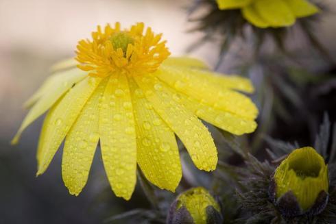 Imagen de una flor en primavera