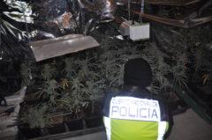 Imagen del invernadero facilitada por la Policía nacional.